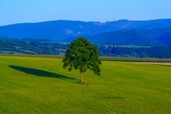 Lonely tree on the field in the evening. Lonely tree on the bevelled field in the evening in Slovakia, Europe stock photos