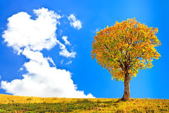 Lonely tree and a big cloud on blue sky background Royalty Free Stock Photos