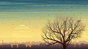 Lonely tree with birds on background of city at sunset. Horizontal illustration of old historic European city and lonely tree without leaves with nest and birds Royalty Free Stock Photos