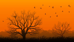 Lonely tree with birds at sunset. Royalty Free Stock Images