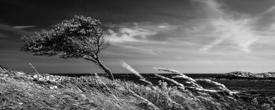 Lonely tree in black and white Stock Photo