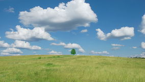 Lonely tree on blue sky and cloud background. Time lapse shot of lonely tree on blue sky and cloud background stock footage