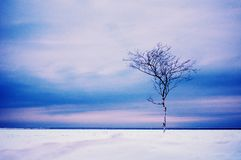 The lonely tree. A lonely tree with blue sky and clouds and a touche of pink. Snow Royalty Free Stock Images