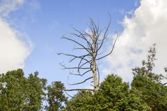 Lonely tree in blue sky Stock Photo