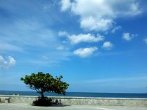Lonely tree by the boulevard. A lonely tree standing at the boulevard by the sea. The beautiful blue sky and the blue sea forms a scenic background Royalty Free Stock Images