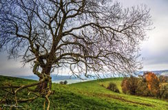 Lonely tree. On the brink of autumn Royalty Free Stock Images
