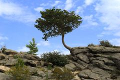 Lonely tree and bush on the rock. A lonely curved green tree and a small bush on a rock stock photo