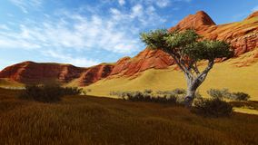 Lonely tree in a canyon at evening time 1 Royalty Free Stock Photography