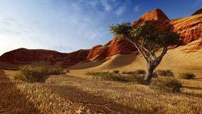 Lonely tree in a canyon at evening time 2 Royalty Free Stock Photo