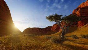 Lonely tree in a canyon at sunrise or sunset Stock Images