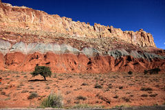 Lonely tree in capital reef Royalty Free Stock Photography