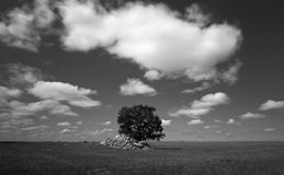 Lonely tree in a cereal field in summer in Castilla Stock Images