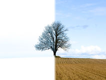 Lonely tree change from winter to spring Royalty Free Stock Photo