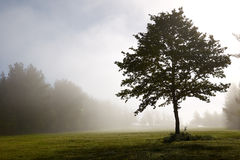 Lonely tree in a chilly morning Royalty Free Stock Photos