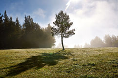 Lonely tree in a chilly morning Royalty Free Stock Photography