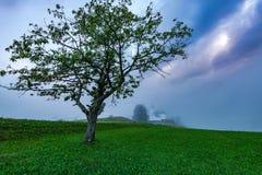 Lonely tree and Church of saint Nikolaja in Sorica, Slovenia at. Misty day stock photo