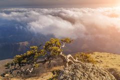 Lonely tree on a cliff in the mountains Royalty Free Stock Photo
