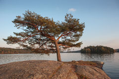 Lonely tree Stock Photos