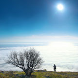 Lonely tree with clouds Royalty Free Stock Image