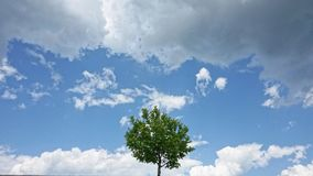 Lonely tree among clouds Royalty Free Stock Image