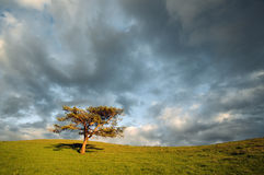 Lonely tree and cloudy sky. At the sunset Royalty Free Stock Photos