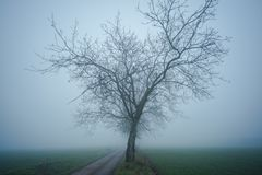 Lonely tree in cold and foggy day royalty free stock image