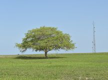 Lonely Tree and Communication Tower Stock Images