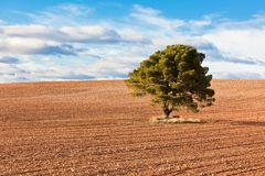 Lonely Tree with copy space Royalty Free Stock Image