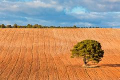 Lonely Tree with copy space Stock Image