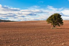 Lonely Tree with copy space Royalty Free Stock Photography