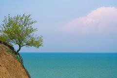 Lonely tree on  the cost. Lonely tree on the cost of blue see Stock Photos