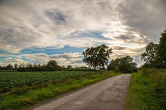 Lonely tree on a country road Royalty Free Stock Image