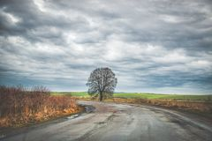 Lonely tree by country road Stock Images