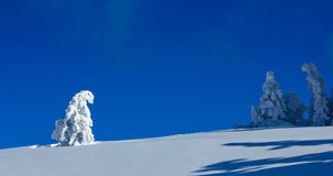 Lonely tree covered with snow. A tiny lonely tree covered with snow on the top of a high mountain with clear, blue sky and other trees hid in the background Stock Image