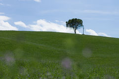 Lonely tree and cross, Tuscan Stock Photos