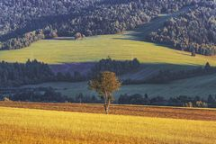 Lonely tree and cultivated field. Beautiful rural valley royalty free stock photos
