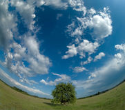Lonely tree with a curved horizon. And cloudy sky Stock Photos