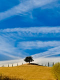 Lonely tree and cypress in Tuscan field Stock Images
