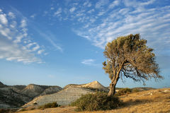 Lonely tree in Cyprus. On desert Stock Images