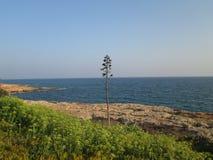Lonely tree. Cyprus, Mediterranean Sea Stock Photography