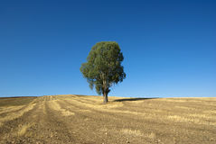 Lonely Tree In Dark Blue Sky Stock Image