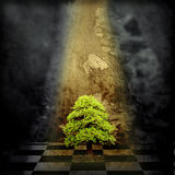 Lonely Tree in a dark room Stock Photos