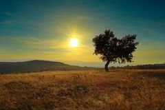 Lonely tree at dawn. Colorful light over the field Royalty Free Stock Image