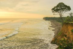 Lonely tree in death beach. In lais north bengkulu regency royalty free stock images