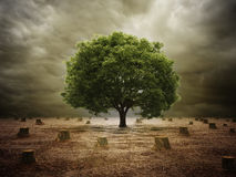 Lonely tree in a deforested landscape Royalty Free Stock Photos