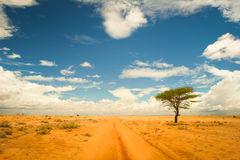 Lonely tree in the desert Royalty Free Stock Image