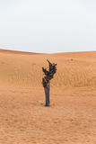 Lonely Tree in The Desert at Dubai Stock Photography