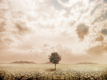 Lonely tree in the desert Royalty Free Stock Photos