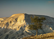 Lonely tree in desert of the Negev Stock Images