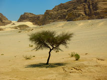 Lonely tree in the desert. See my other works in portfolio Royalty Free Stock Image
